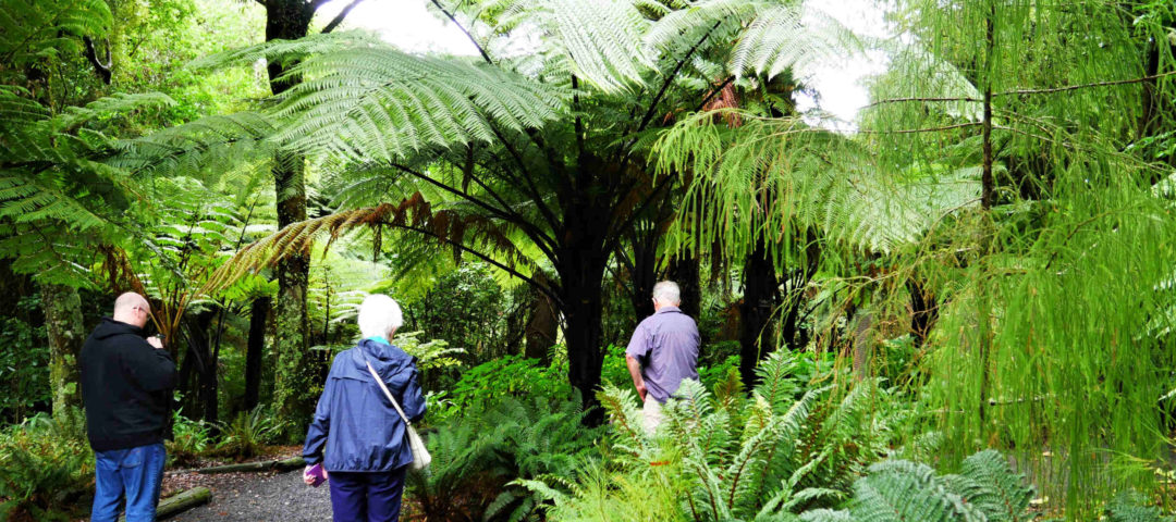 uTours Wellington Private Day Tours Art Lovers Things to do local food coffee nature bush